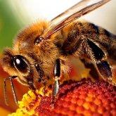 Baranya Megyei Önkormányzat részt vesz a Bee2Be projektben
